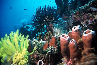 http://ndinndun.files.wordpress.com/2009/05/bunaken-reef.jpg
